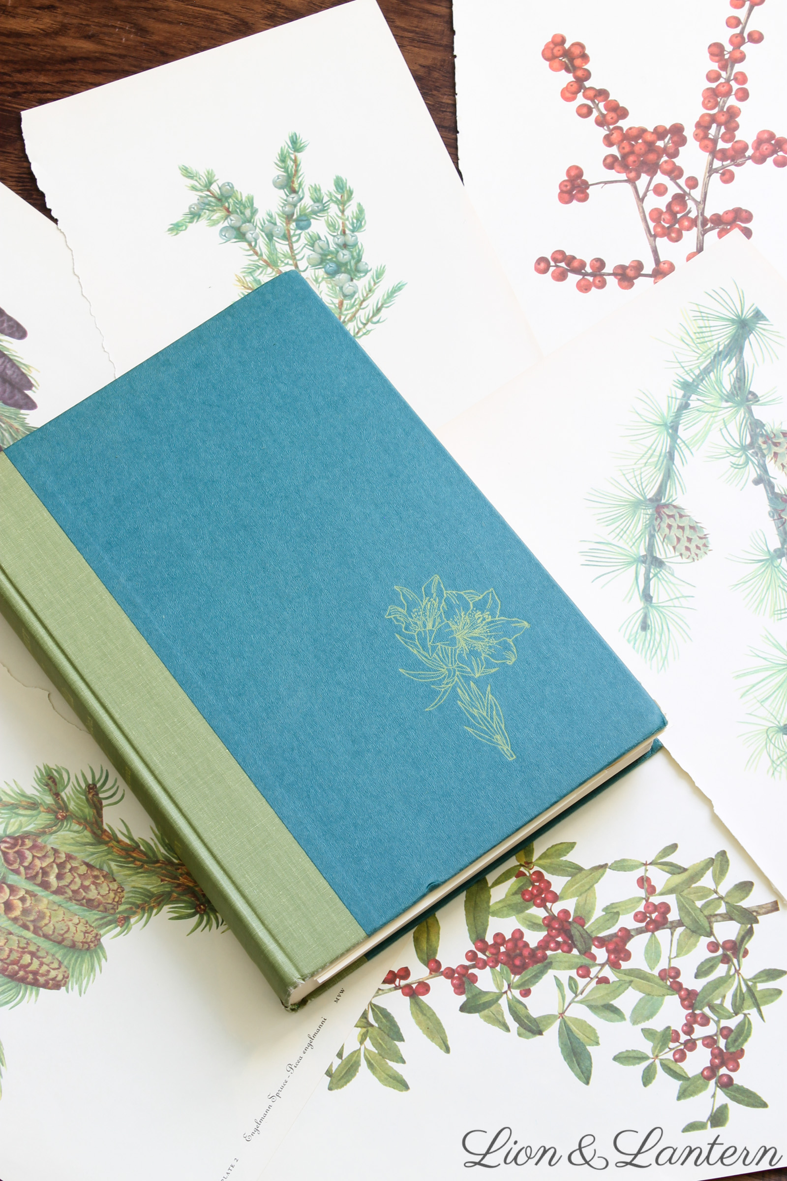 Budget Decor: Botanical Book Pages at LionAndLantern.com. Farmhouse Christmas, inexpensive decor, DIY decor, cheap, easy, simple, botany.