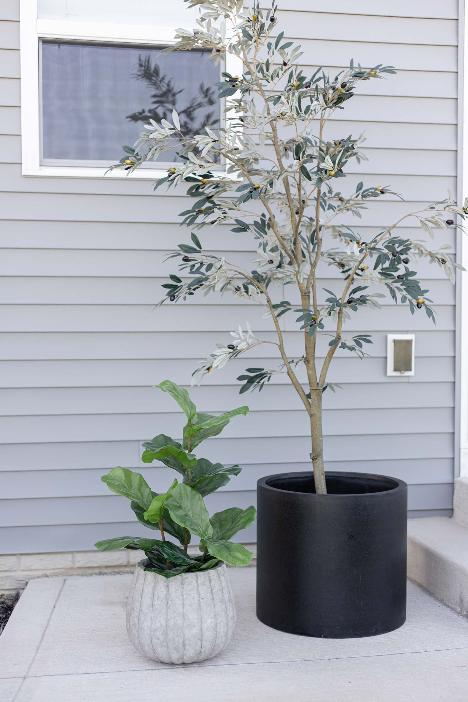 large black planter with olive tree, small gray scalloped planter with fiddle leaf fig