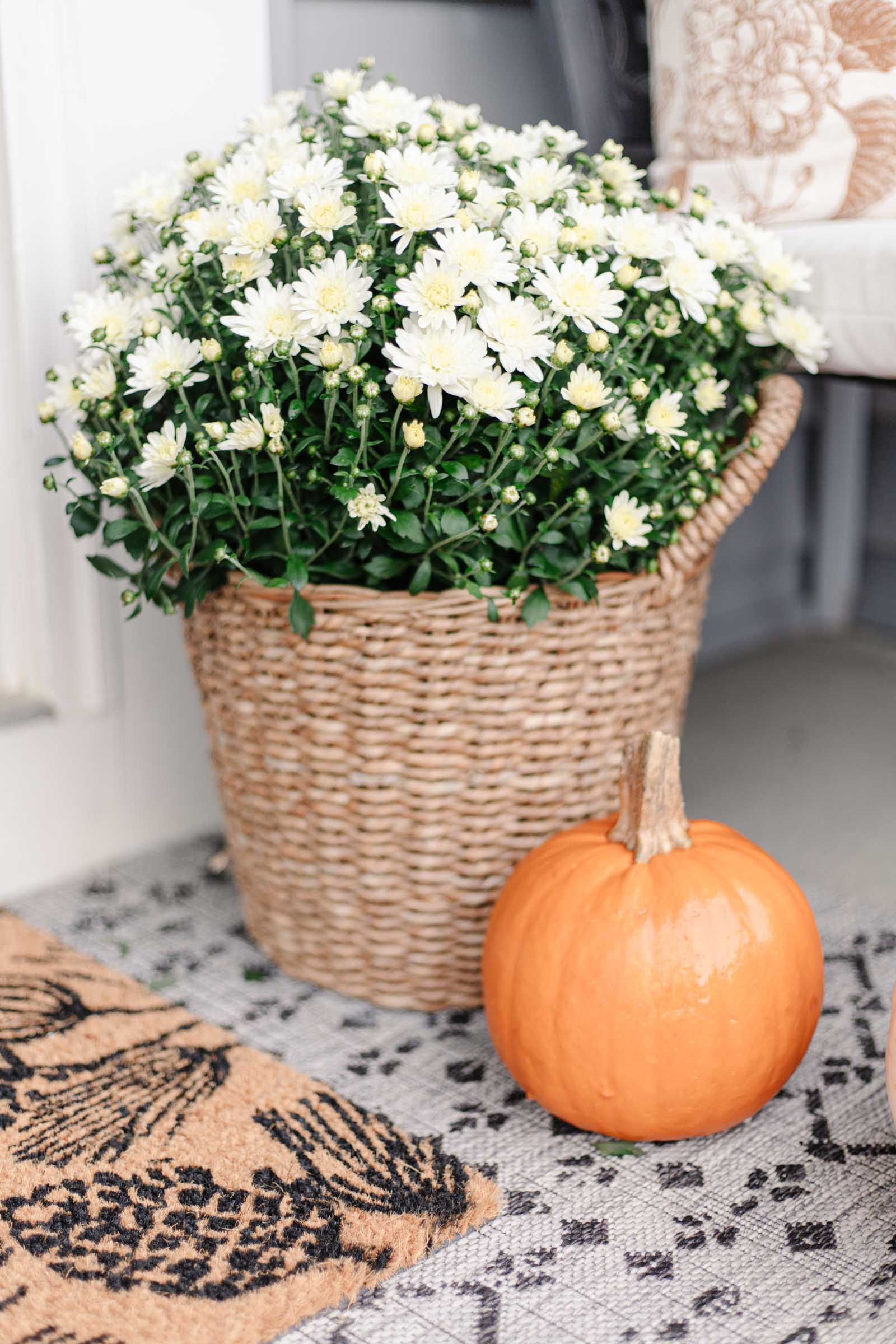 basket planter with mum, small orange pumpkin