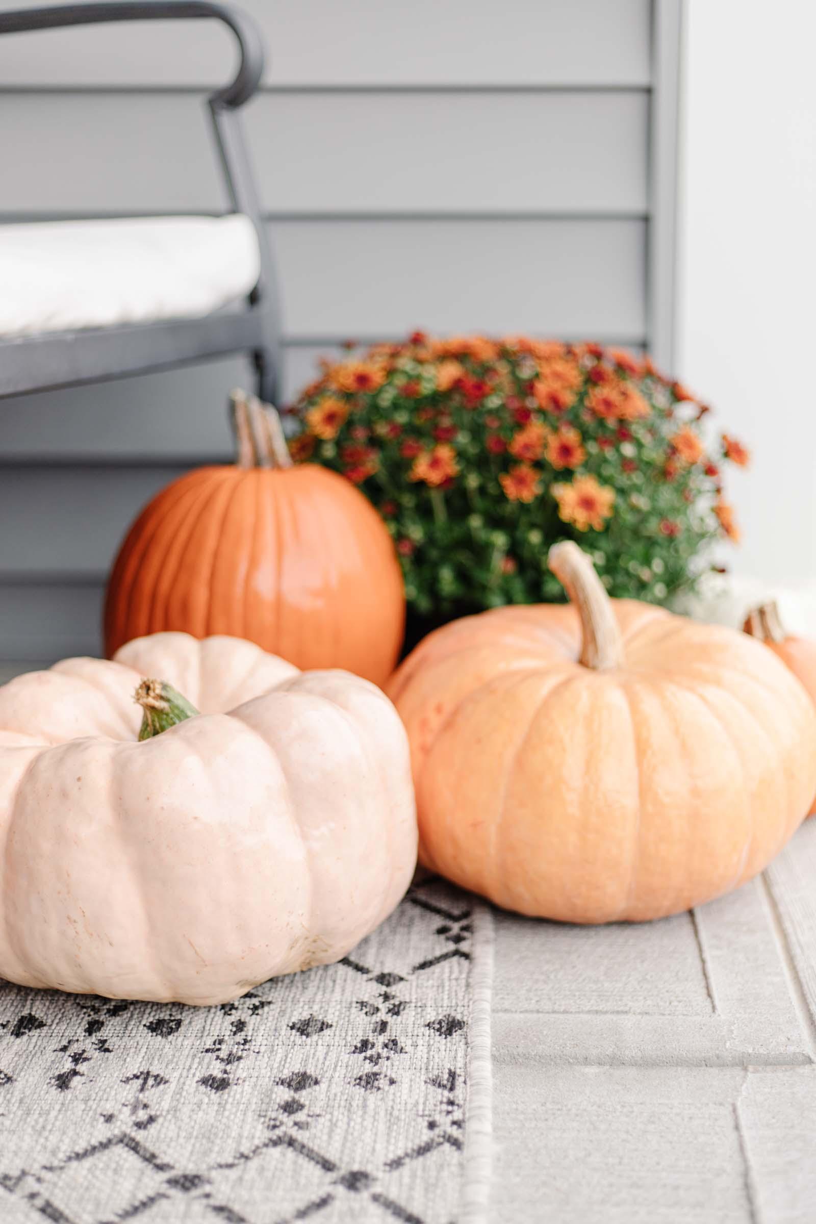 assorted orange and pink pumpkins